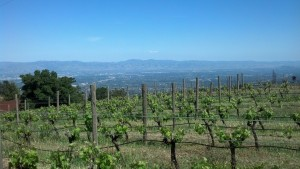 Cali Wine Road Trip – Day 3 – Ridge
